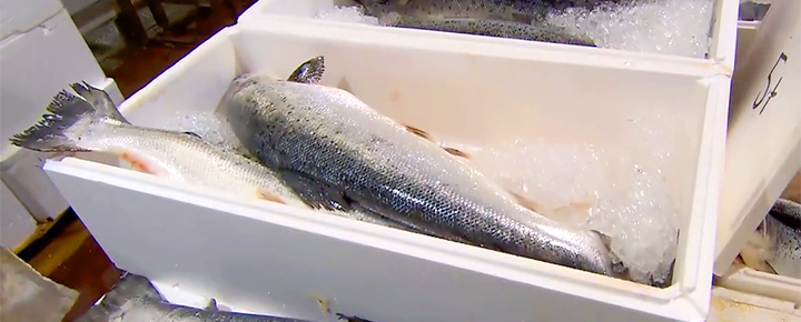 Expanded polystyrene (EPS) airpop fish boxes star in the coolest new video on YouTube