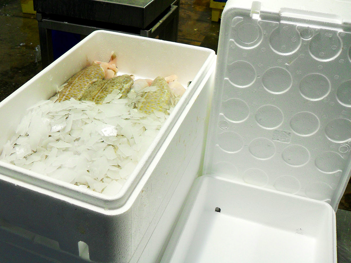 Fish boxes made from EPS expanded polystyrene airpop keep fish fresh for longer
